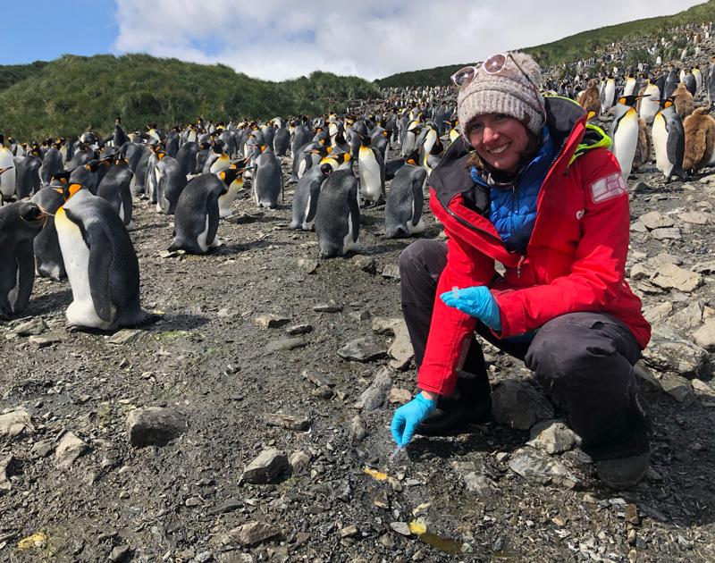 penguins-southern-ocean