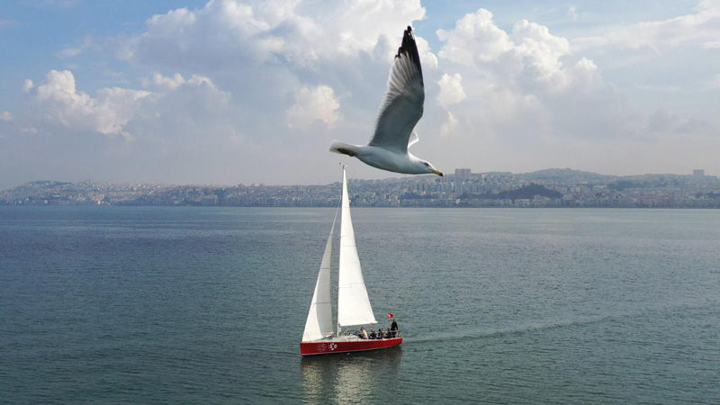 bear-sailing