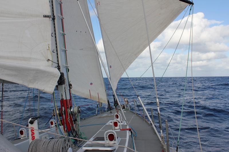 pelagic-australis-sailing